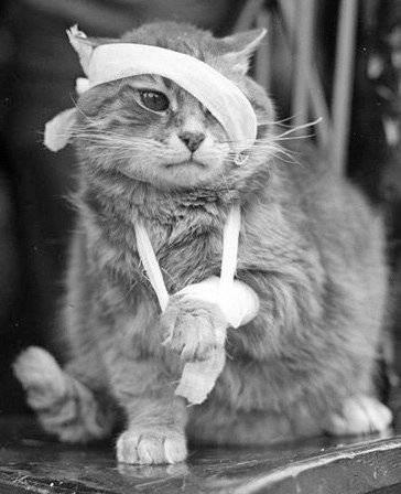 Кишечное кровотечение у кошки