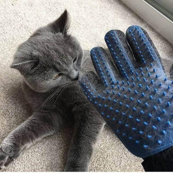 Как правильно вычесывать кошку: инструкции, особенности процедуры