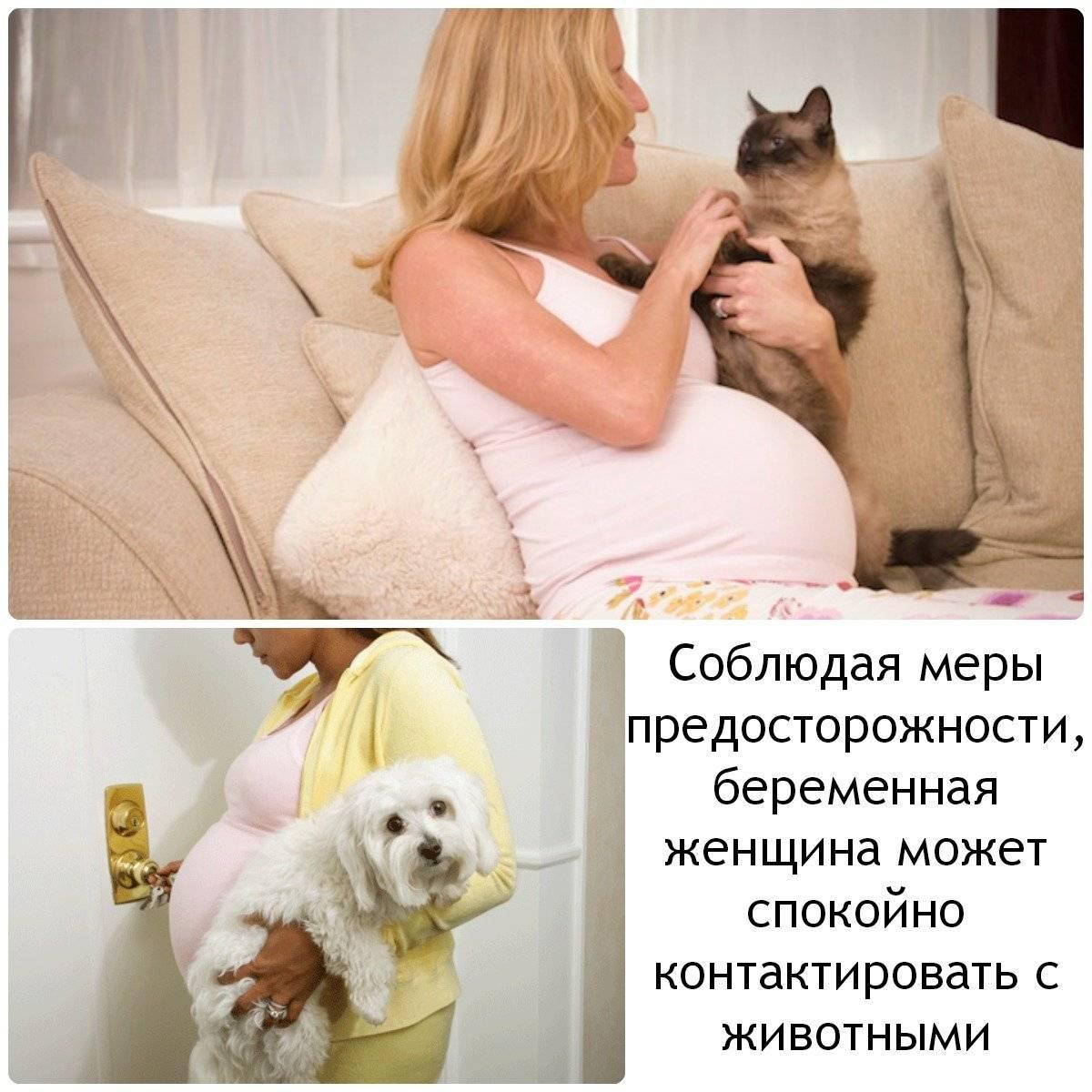 Можно ли беременным жить с котом. существует ли опасность для беременной женщины, если в доме живёт кошка