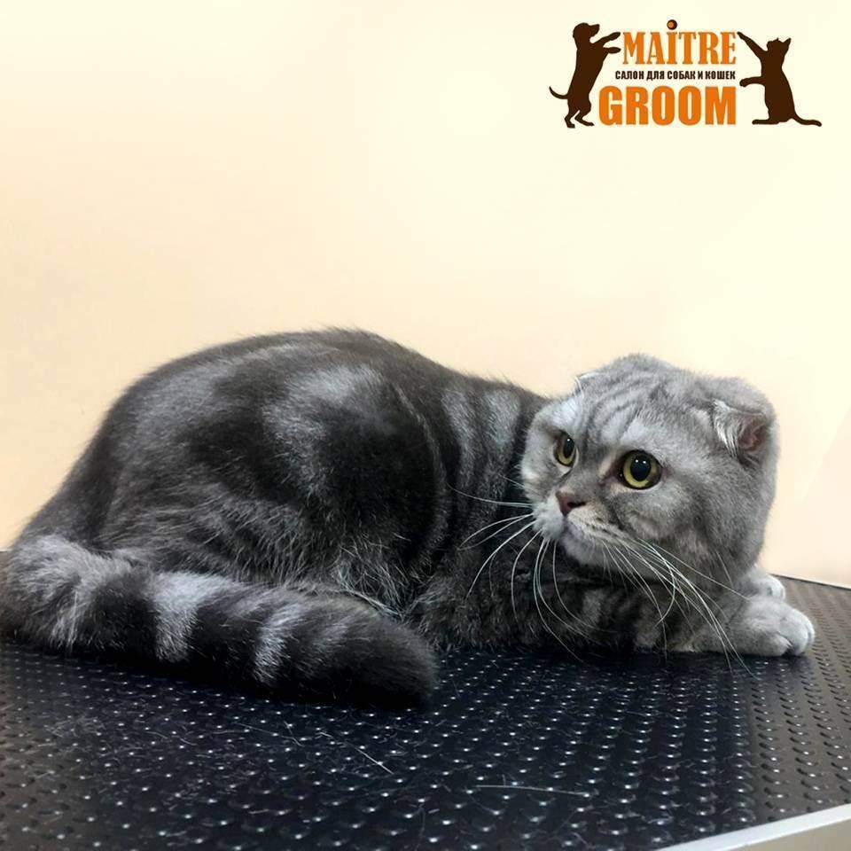 Почему считается, что нельзя стричь кошек, как часто можно делать стрижку или брить питомцев и как быстро они обрастают?