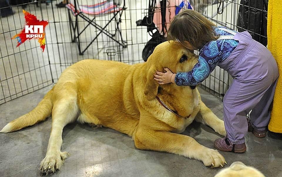 Влияние домашних животных на здоровье человека