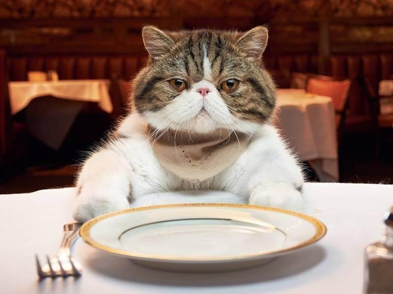 Какие крупы можно давать кошкам – подбираем вкусную и полезную кашу