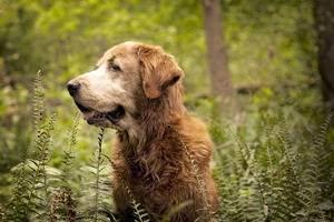 Пироплазмоз у собак-как диагностировать и лечить страшный недуг