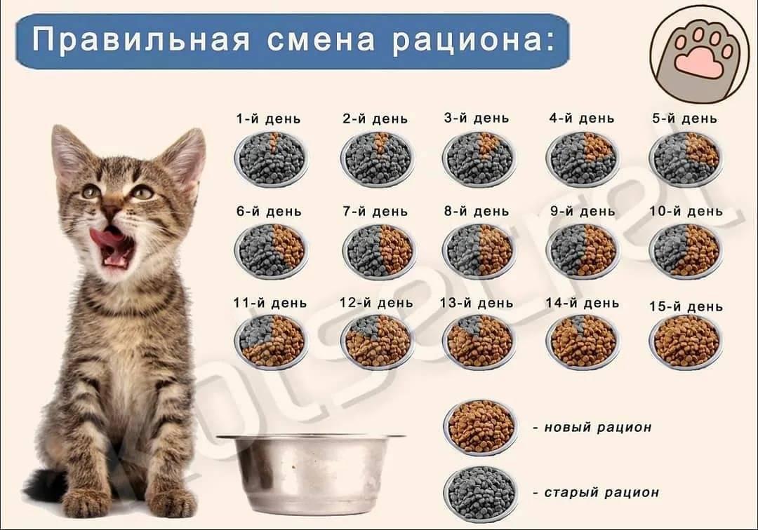 Чем кормить котенка в один месяц