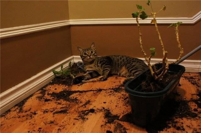 Котенок ест наполнитель для туалета: насколько это вредно и что делать в такой ситуации?