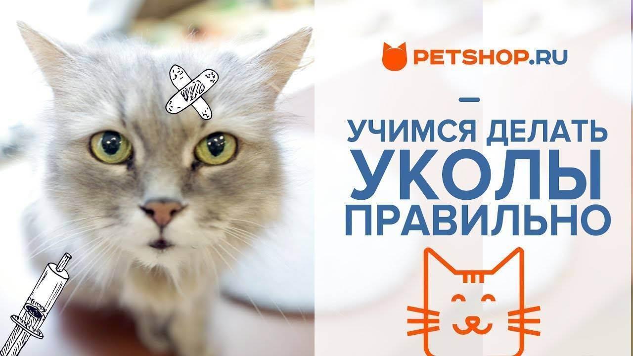 Как сделать укол кошке в бедро, как делать котам уколы?