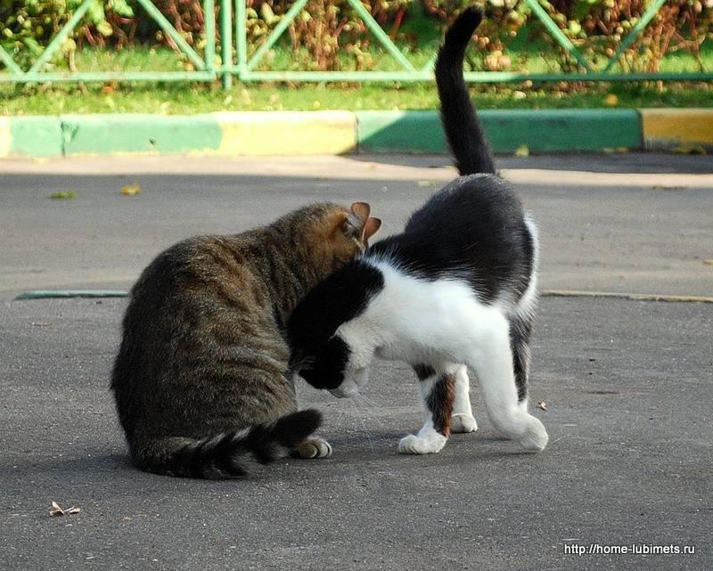 Почему кошки и коты шипят: на человека и друг на друга