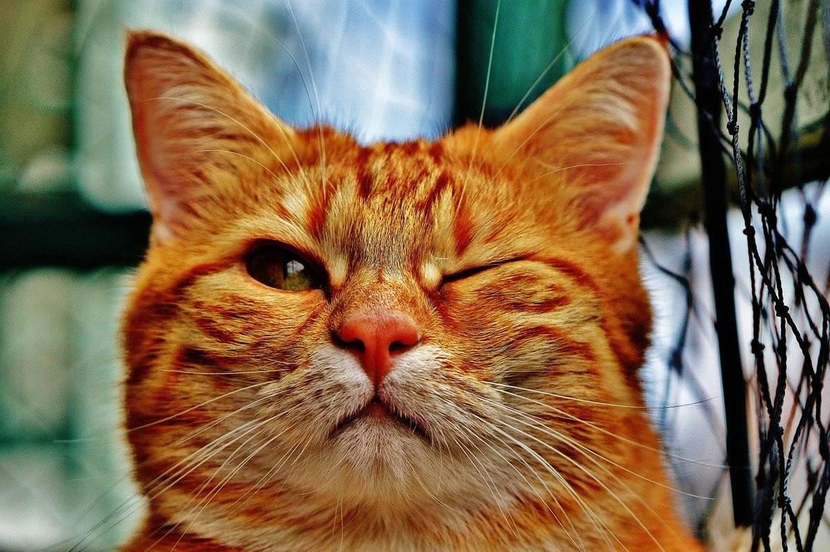 Что значит, если кошки смотрят в глаза человеку, и почему котам нельзя смотреть прямо в глаза; если кот на тебя не смотрит — это плохо?