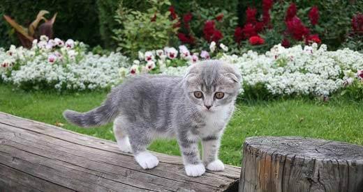 Как назвать сиамского кота или кошку? интересные клички