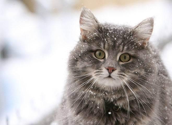 К чему коты уходят из дома и не возвращаются?