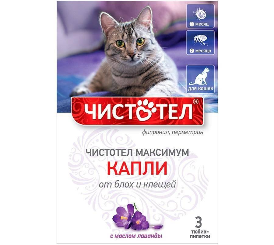Советы по применению разных видов чистотела от блох и клещей для кошек