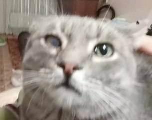 Как приручить кошку. почему кошка не сидит на руках, поведение кошки в 2020 году