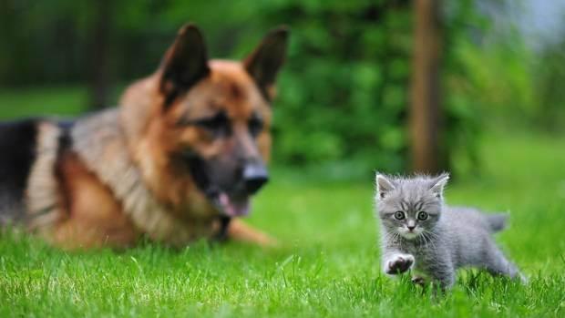 Выбираем натуральное питание для кошки. меню домашнего хищника