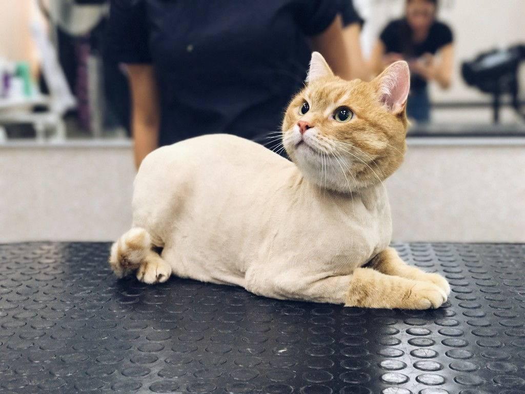 Как подстричь когти кошке самостоятельно: быстро и безболезненно