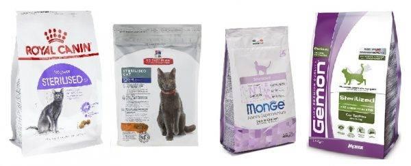 Кошачий корм: рейтинг продуктов для кормления кошек и котят от эконом- до супер-премиум-класса