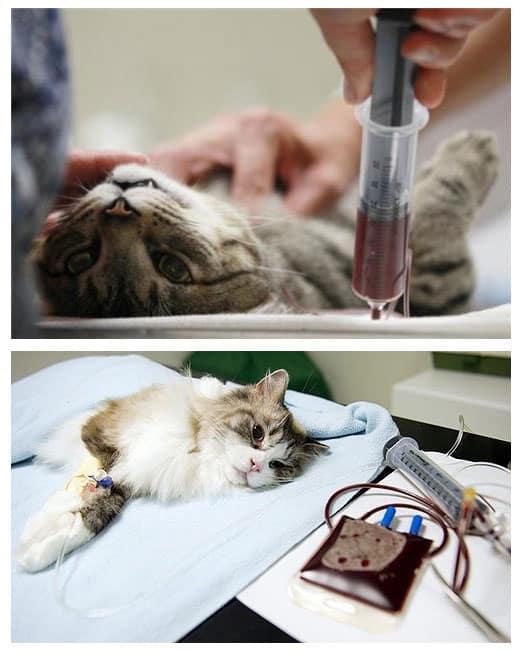 Артрит у кошек и котов - симптомы, лечение, препараты, причины появления | наши лучшие друзья