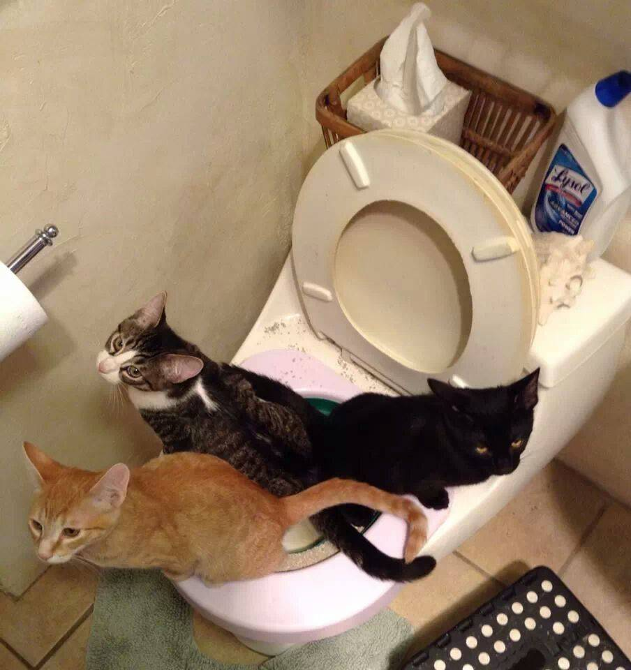 Как приучить котенка к рукам и ласке, почему некоторые кошки не любят сидеть у хозяина?