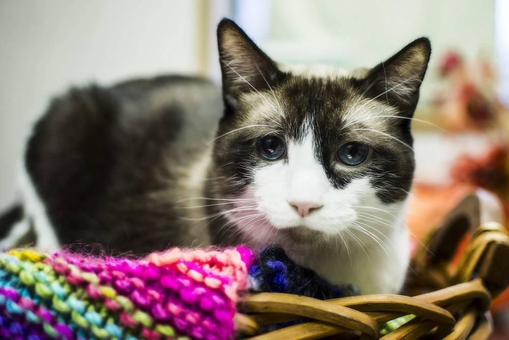 Сколько стоит усыпить кошку в ветклинике или на дому?
