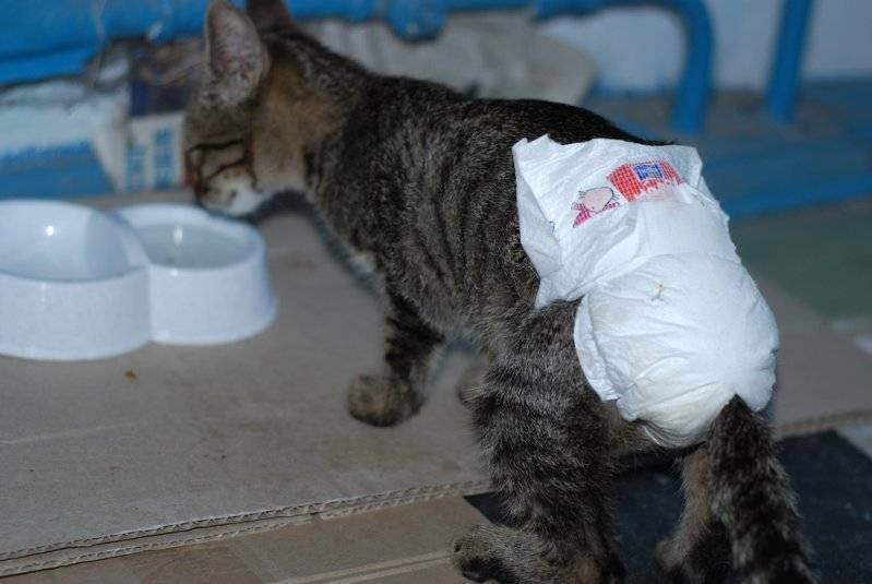 Понос у котенка в 2 месяца: причины, что делать, чем кормить