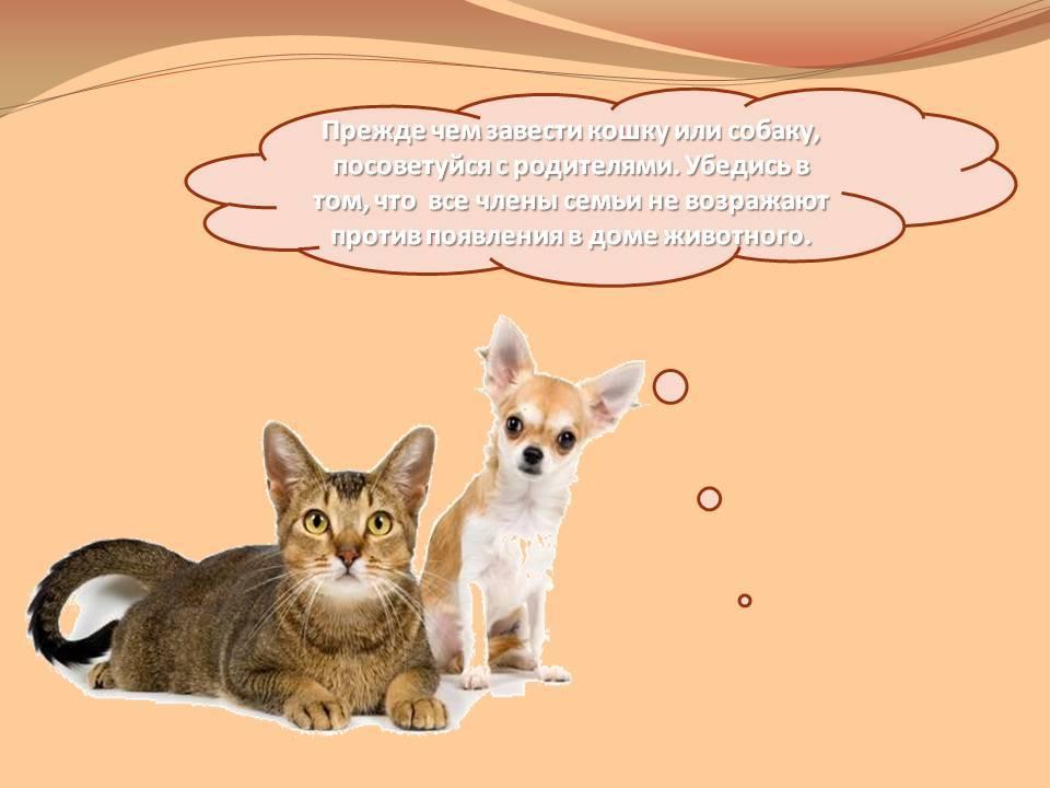 Кого лучше завести? кошку или собаку?
