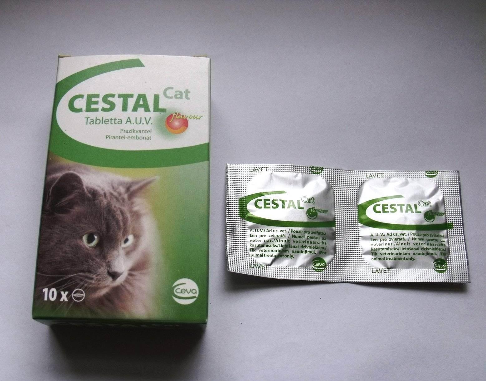 Пирантел для кошек: инструкция по применению, аналоги, отзывы