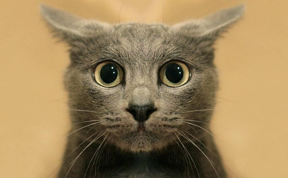 Можно ли смотреть коту в глаза ?