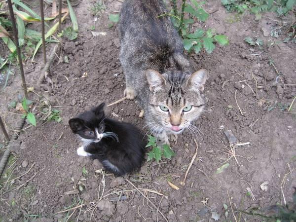 5 пород котов, которые ловят мышей и крыс лучше остальных