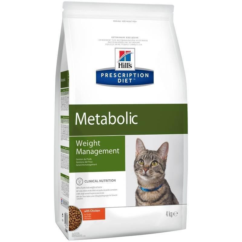 Чем можно откормить кошку, чтобы она набрала массу и стала толстой: высококалорийные корма для набора веса