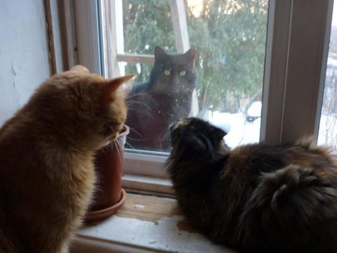 Почему у кота открытый рот, он приоткрывает пасть и дышит, как собака?