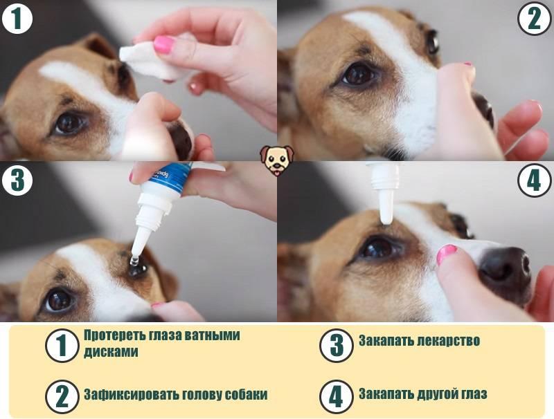 Как промыть глаза кошке или котенку: средства и описание процедуры