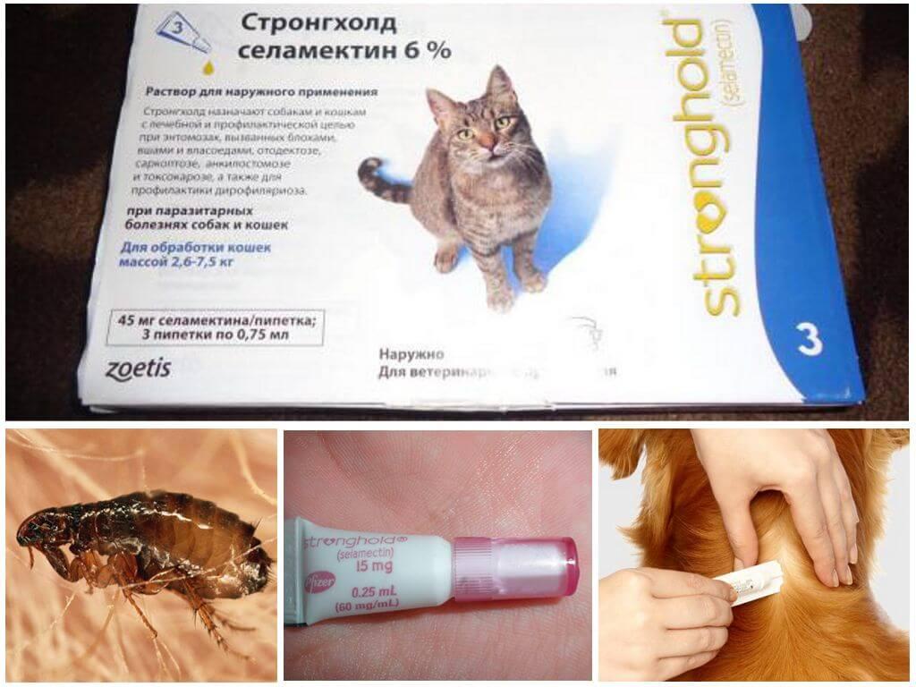 Капли для кошек стронгхолд: инструкция по применению, состав и показания, аналоги и отзывы