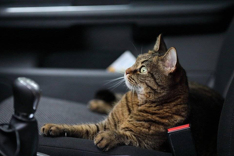 Советы и рекомендации для безопасного путешествия с котом на машине
