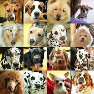 Хочется собаку, но ребенку два года, стоит ли? - запись пользователя маришка (krilova83) в сообществе домашние животные в категории дети и животные - babyblog.ru