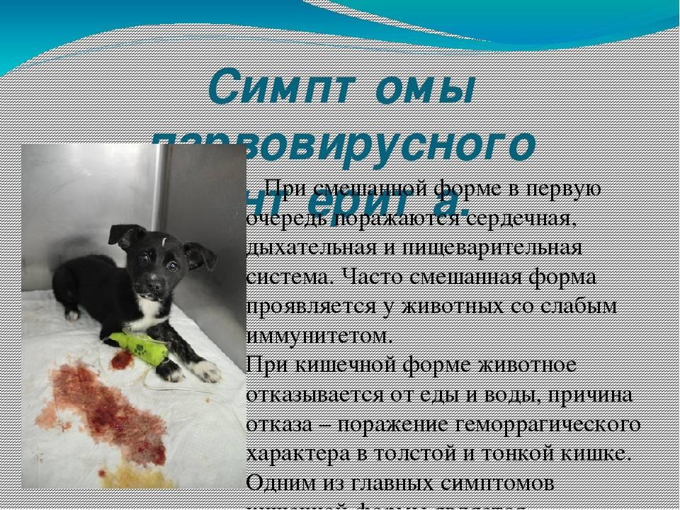 Болезни кошек вирусные: риновирус и другие инфекции у котят и взрослых животных, симптомы и лечение