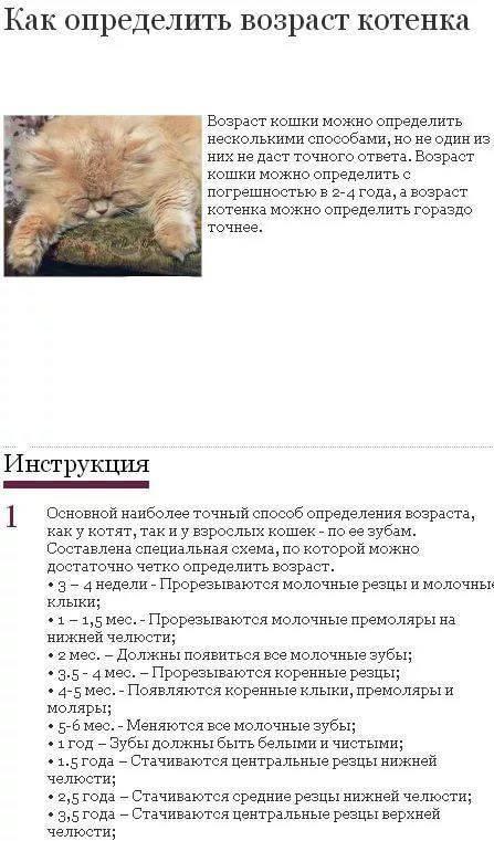 С какого возраста кошка может забеременеть: сроки и этапы беременности