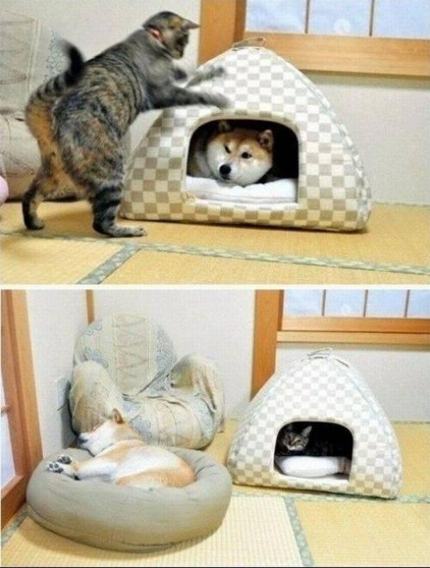 Как приучить кошку к лежанке: быстро и просто
