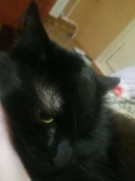 Что провоцирует появление залысин у кошки?