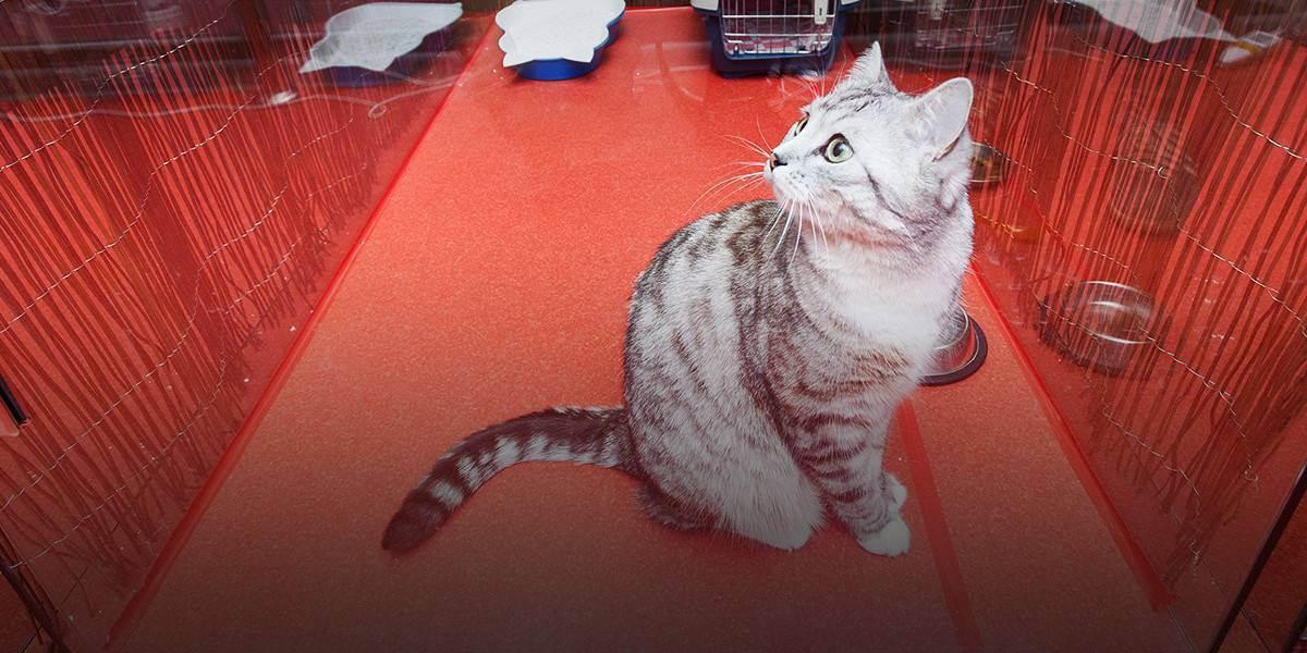 Как выбрать гостиницу для кошки