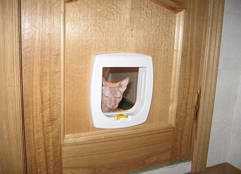Правильный выбор двери для кошки