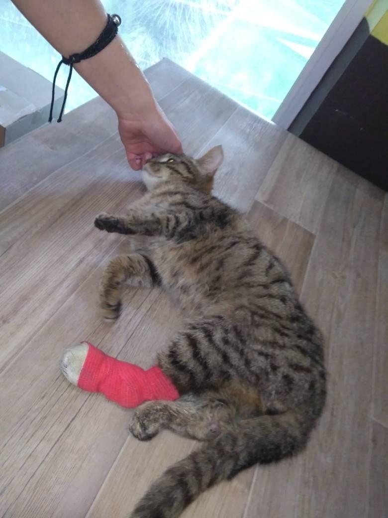 Как ухаживать за котенком со сломанной лапой: 14 шагов