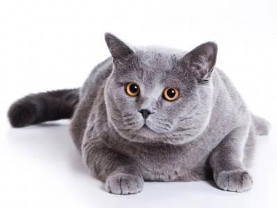 Питание кота после операции на кишечнике