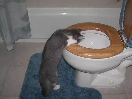 У кота понос и рвота, что делать в домашних условиях: чем и как лечить