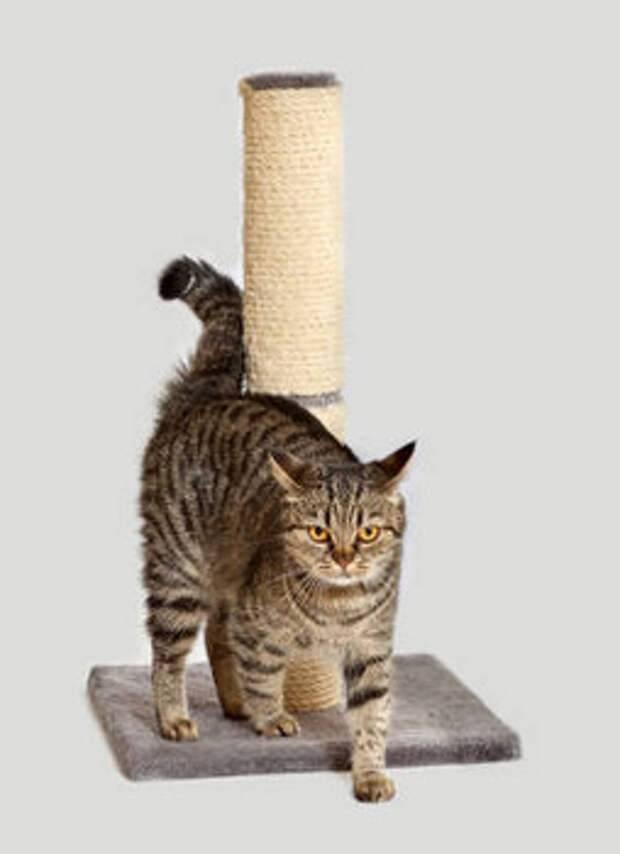 Эффективное решение «острой» проблемы кошачьих когтей – подробные советы по приучению к когтеточке + секреты разумного выбора