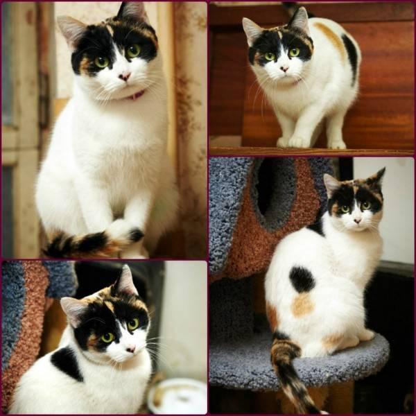 Необычные породы кошек (33 фото): названия и описание самых интересных пород домашних котов