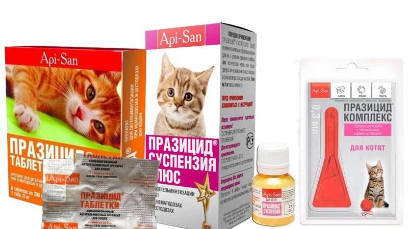 Празител для кошек и котят: инструкция по применению, отзывы