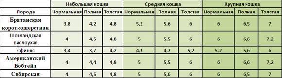 Вес британского котенка по месяцам: таблица набора массы по возрасту