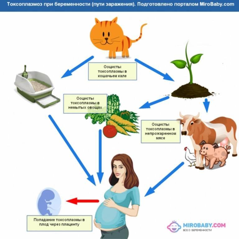 Беременность и роды у кошки - что нужно знать владельцу