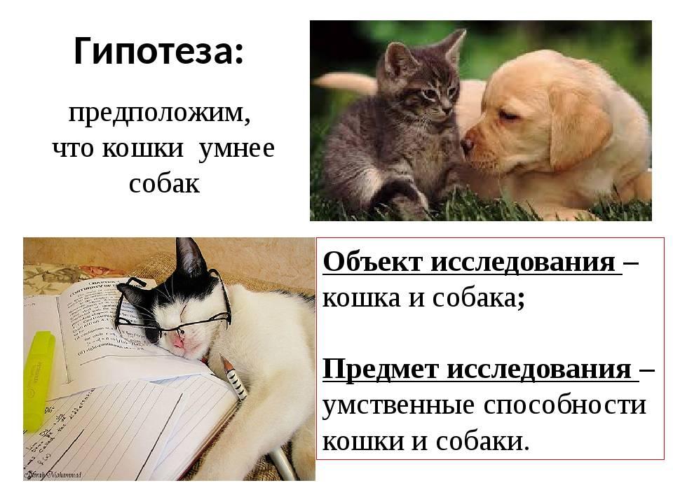Ученые выяснили, кто умнее - кошки или собаки
