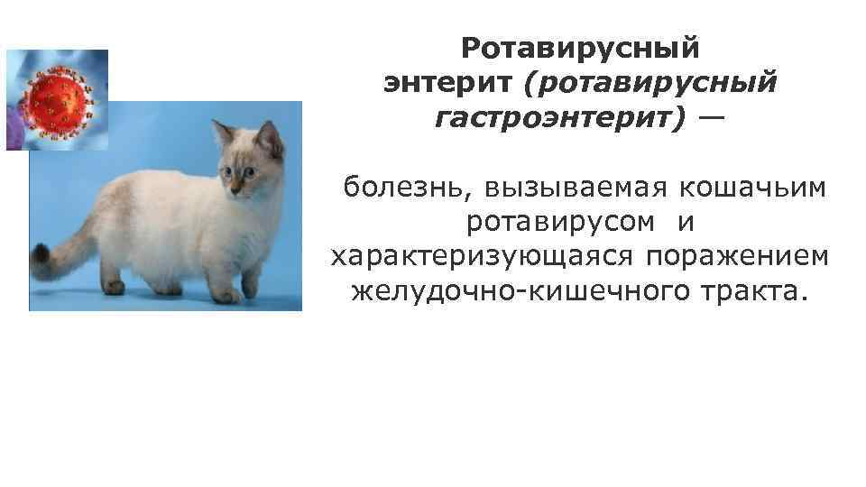 Какие бывают летальные инфекции кошек и их причиныветлечебница рос-вет