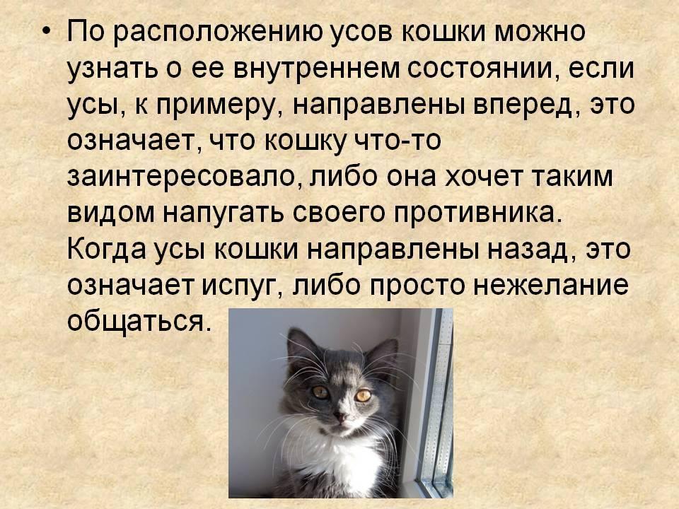 Функции усов и зачем они нужны кошкам